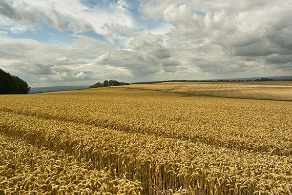 Glastonbury grain field crop circle